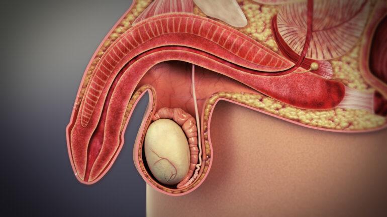 Si può curare la disfunzione erettile?