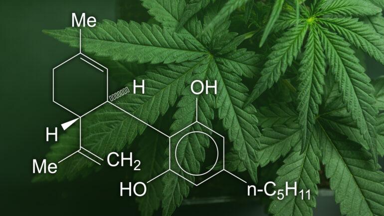 Cannabis OIl: acquisto, sito ufficiale e prezzo. Dove comprare?