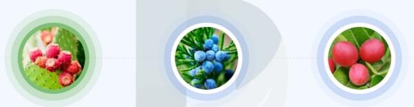 Quali ingredienti contiene la formula di Detoximer?