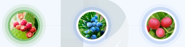 NanoVein - quali ingredienti sono contenuti nella formula del gel?